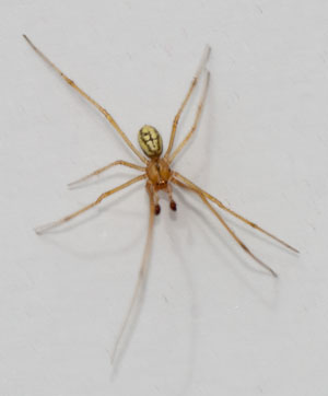 Spider, photographed 18 July 2010 by B Crowley