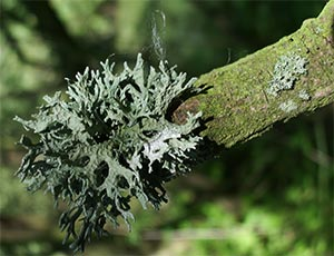 Lichen, photographed 17 July 2005 by B Crowley