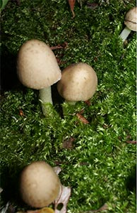 Small mushrooms growing on log, photographed 2 Aug 2005 by B Crowley