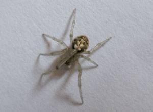 Spider, photographed 03 June 2007